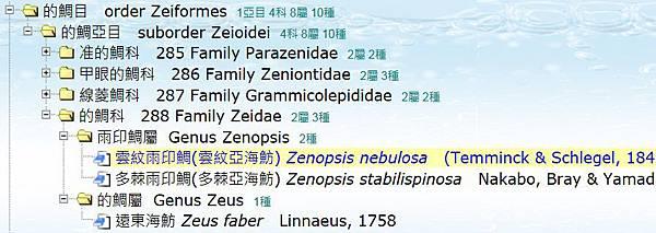 多利魚分類.jpg