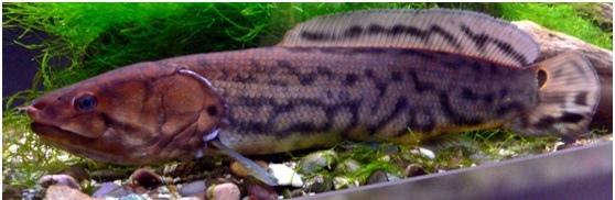 dogfish4.jpg