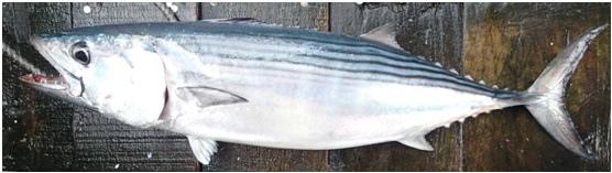 dogfish1.jpg