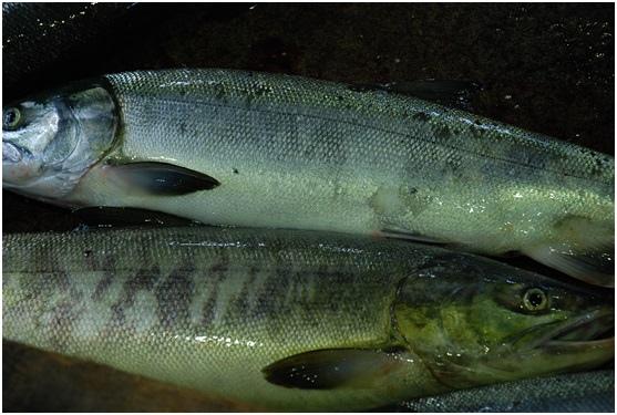 dogfish2.jpg