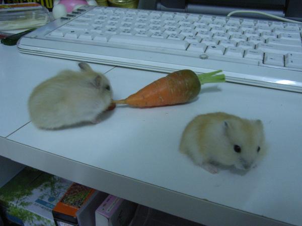 蘿蔔呀...