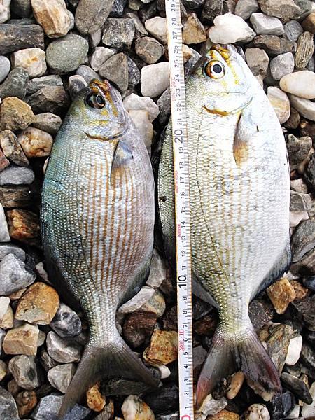 海釣收穫.jpg