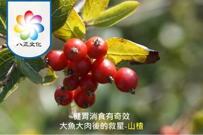 消食化積 活血化瘀的果子藥-山楂