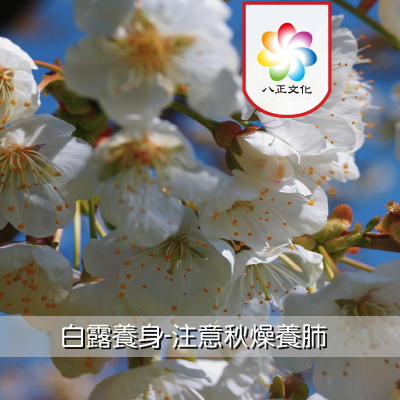 白露-秋燥