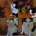rudi & flowers
