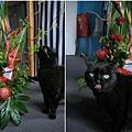 missi & flowers
