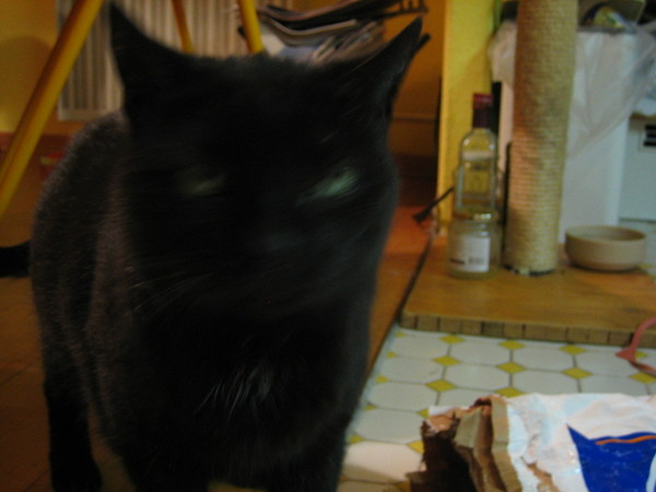 2007 01 katze 004.jpg