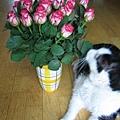 rose & rudi