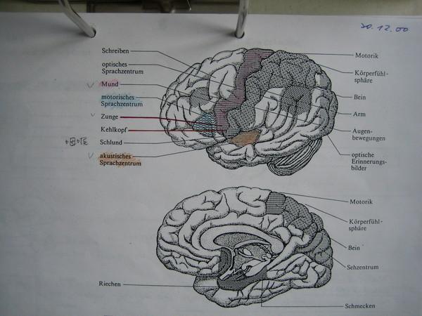 neurolinguistik