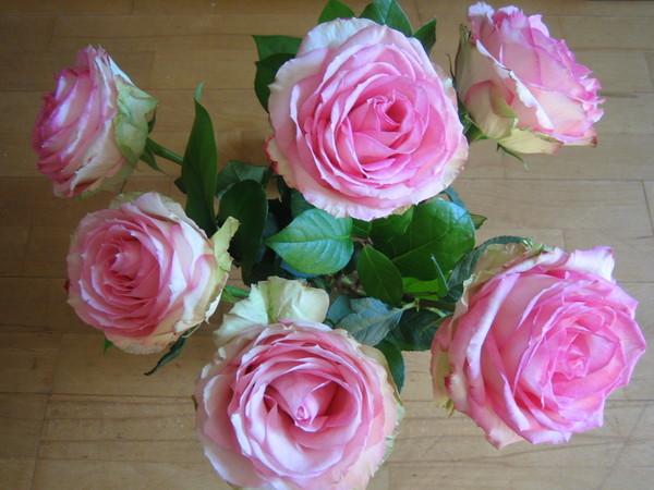 2007 09 13 Flowers 001.jpg
