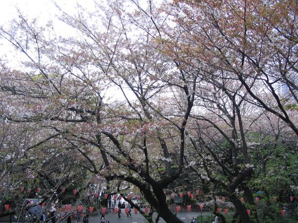 上野公園-05