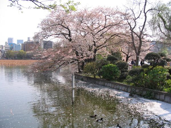 上野公園-12