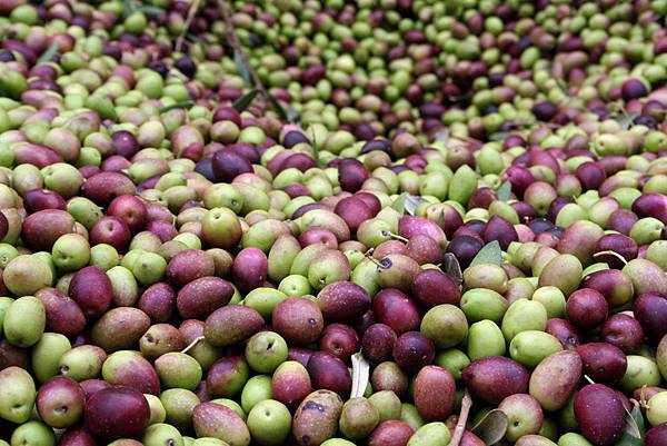 Olives selection_2