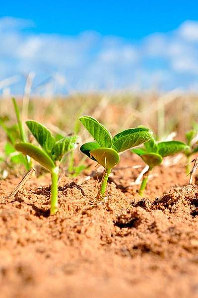 soybeans-1543076_960_720