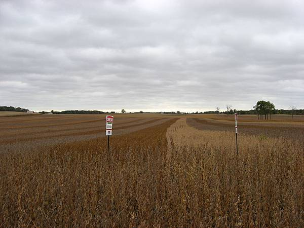 Multicolor_soybeans_in_Hale_Township
