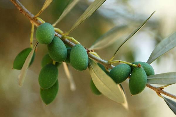 green-olives-871283615489nhDk