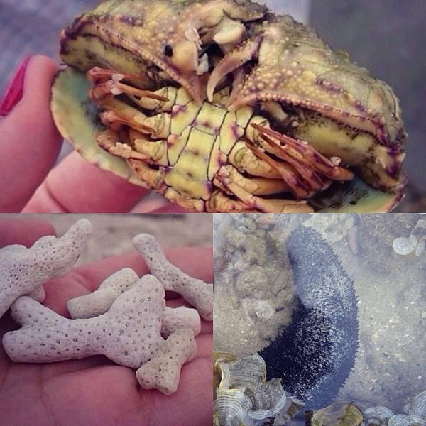 OGG-海膽螃蟹珊瑚