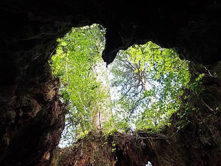 圖1:威爾森之樹是巡訪繩文杉之旅中最受歡迎的景點。.jpg