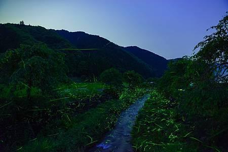 圖3:來飛鳥川一帶有許多地方可欣賞到美麗的螢火蟲.jpg
