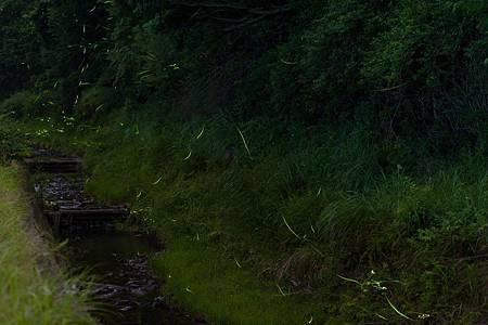 圖4:與小燈籠在鳥川相遇.jpg