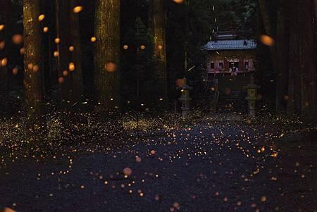 圖5:欣賞棲息於神社境內的螢光,讓人仿若置身電影情境中.jpg