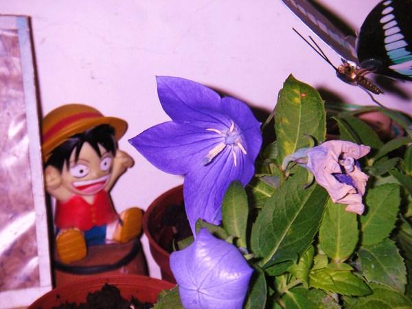 魯夫是花園的園丁