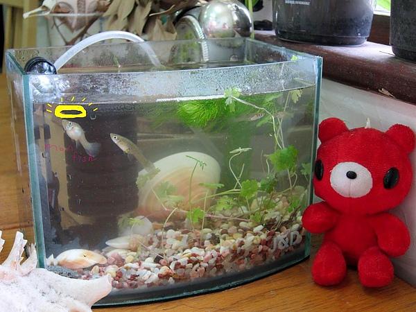 重新曝光mom fish.JPG