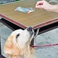 收容所的大金,除了肉乾外,連吻仔魚和紅蘿蔔都很愛吃唷