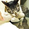以下為普陀表演怎麼玩貓草拳擊棒