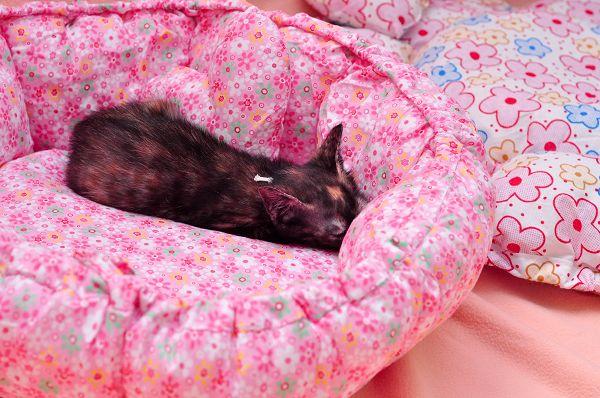 睡起來好舒服