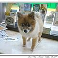 薛小美已經看完診在一旁叫著其他狗狗