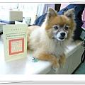 薛小美的狂犬病預防注射證明