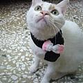 戴圍巾的ayumi,圍巾是解解親手做的哦