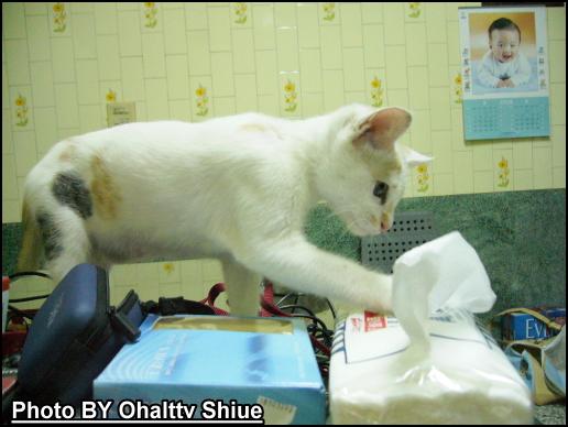 衛生紙也是她好奇的對象之一