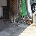 路上偶遇的貓---放空中