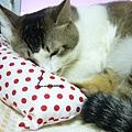 貓抱枕也好好睡