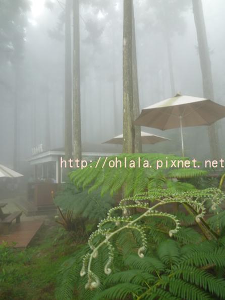 霧裡喝咖啡8.jpg