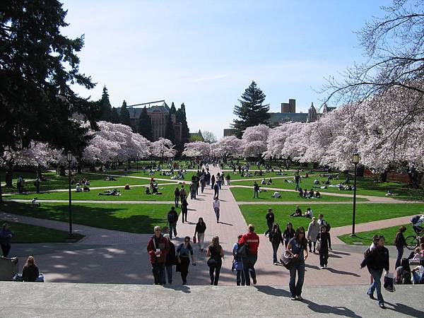 University-of-Washington-Spring