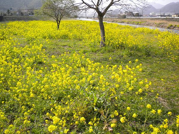 河堤旁的小花.jpg