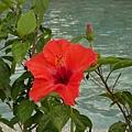 園區裡的花