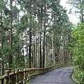很美的樹林