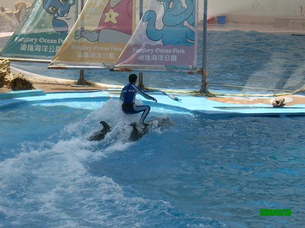不知道騎海豚要不要駕照...?
