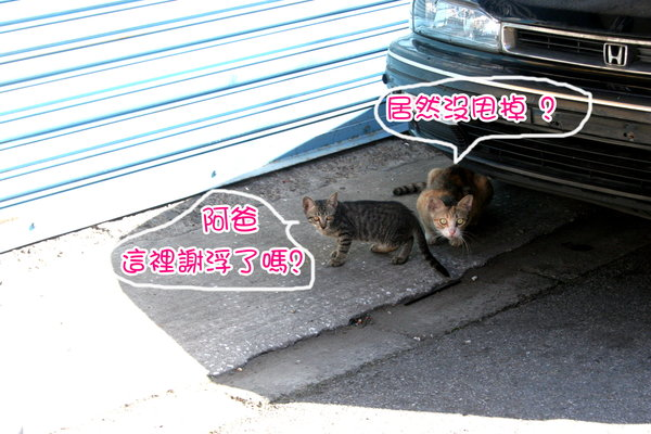 IMG_6372.jpg