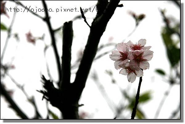 IMG_7121.JPG