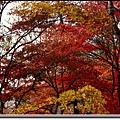 南山公園.jpg