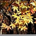 南山公園楓葉.jpg
