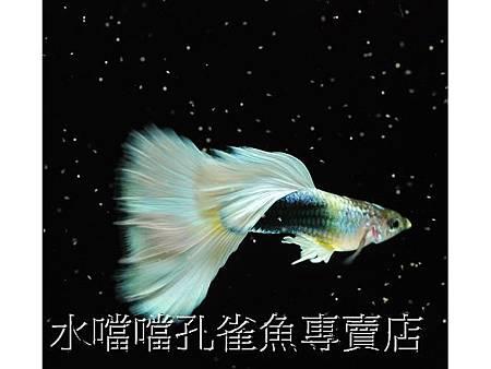 大背黃尾禮服003.jpg
