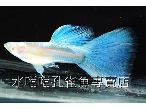 水噹噹003