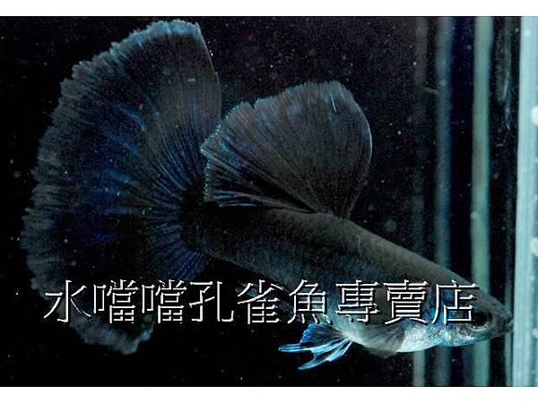 水噹噹001