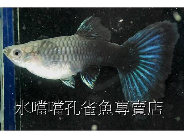 水噹噹006